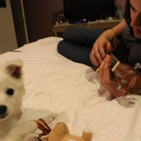 Puppies love ukulele too!
