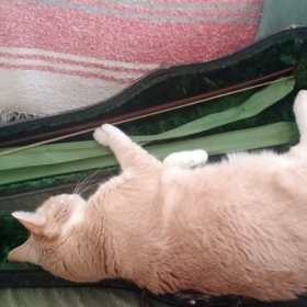My cat Max trying to fit into a violin case.