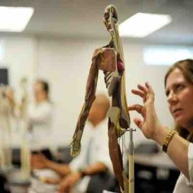 Anatomy - Physiology lessons