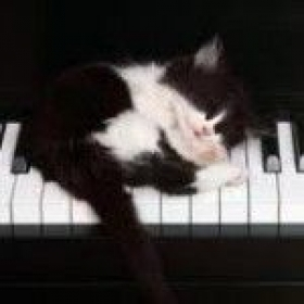 My kitty taking a nap on the piano!