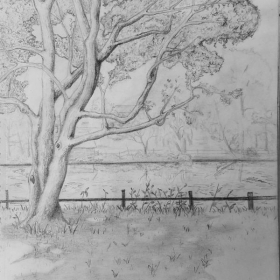 """""""Haverford View"""" A sketch of the Haverford Duck pond."""
