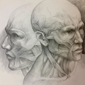 Study of human form, graphite on paper.