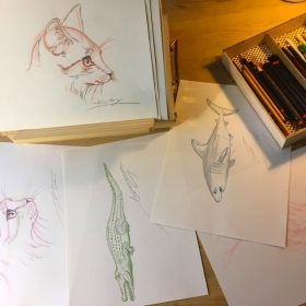 Drawing lessons for students (beginners )