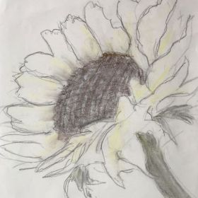 Sunflower drawing by Jane in charcoal and a bit of yellow colored pencil.