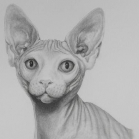 This is my project to become more comfortable at drawing wrinkles, as well as feline features.