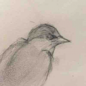 Drawing a bird is easier than you think and can be very therapeutic