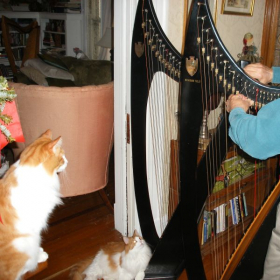 A friend changing strings on 2 Troubadour non-pedal harps, while the boys look on.  Students can rent these (the harps, not the cats :-)).