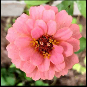Gardening - learn to grow beautiful flowers with me in my gardening classes.
