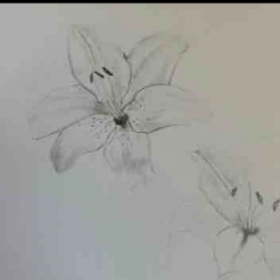 The beginning of realistic Lilly's.