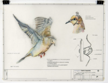 Mourning Dove with Laser Colored pencil and graphite on reclaimed mylar
