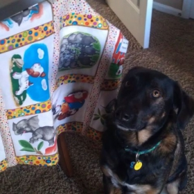 quilt created for my niece (and my baby dog!)