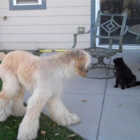 My puppy Melchior (now 2 yrs. 4 mos.) and his cat Noir (3 yrs.).