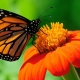 Thumb_194287_pi_butterfly