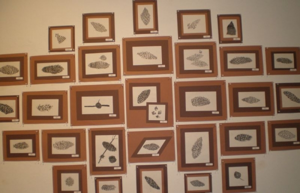 Grade 5 - Natural Science Illustration Lesson - Charcoal drawings on display