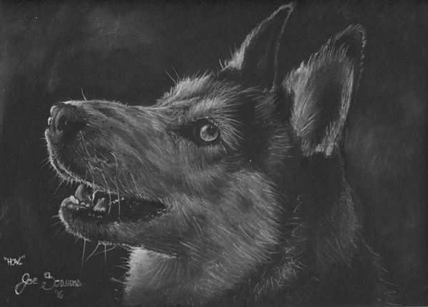 Husky Dog Portrait Drawing On black paper with white & black charcoal