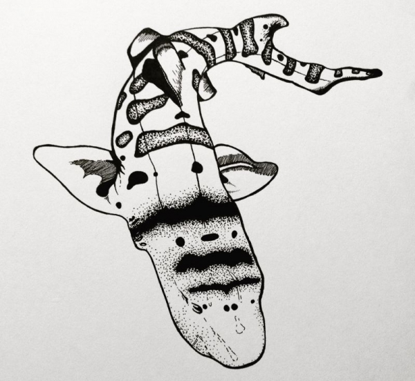 Dogfish Shark (ink pen on paper) August 2016