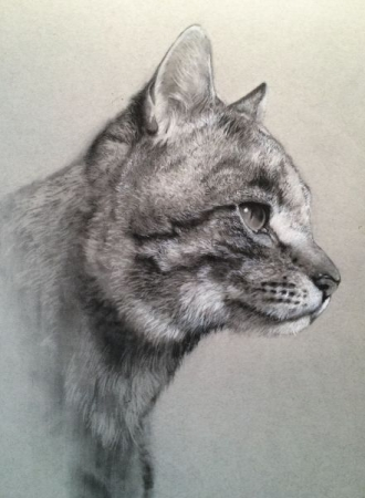 """""""Sienna""""  charcoal on paper"""