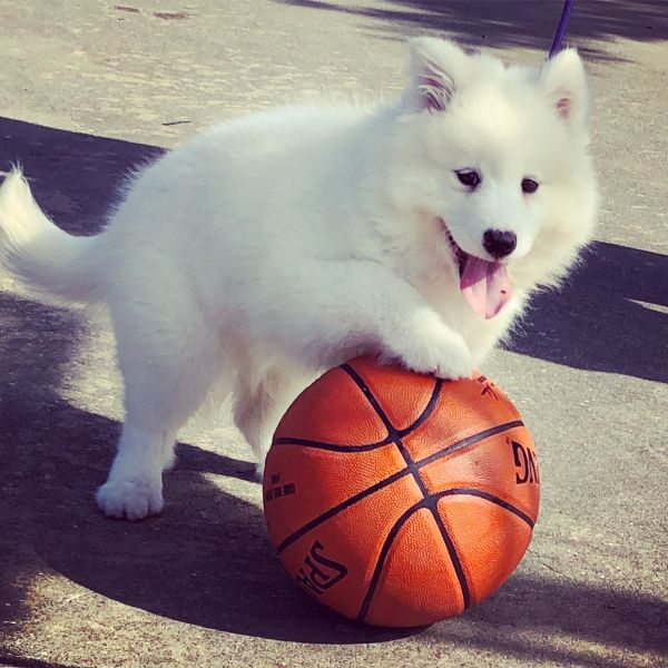 Our puppy, Wynn, playing some basketball.