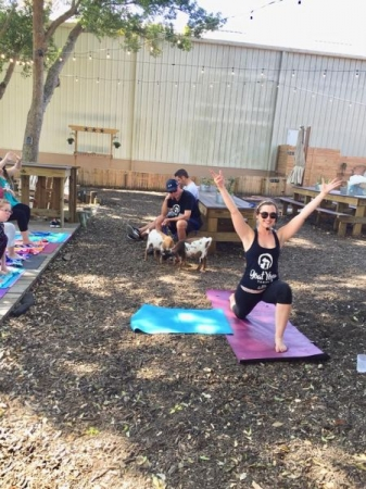 Goat Yoga Tampa- Offering animal therapy, a yoga practice, and complementary drinks.
