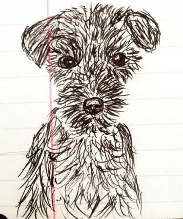 Schnauzer, 2018