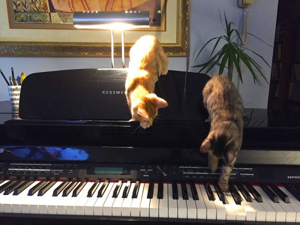 My cats Rhythm n Blues say: Practice makes it Purrr-fect!...