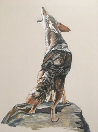 Life size Coyote in acrylics
