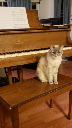 My cat, Clara Schumann, hanging out by the Steinway.