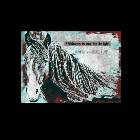 My art made for Wild Horse Preservation Campaign- copyright- Angela Kelly 2019
