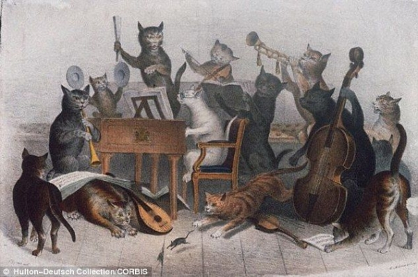 If cats can play a musical instrument, so can you!