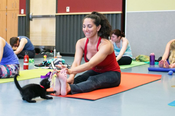 Cats on Mats Yoga Fundraiser for the Humane Society