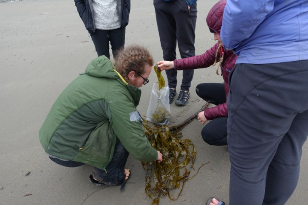 Educating a group of undergraduate students on the wonders of seaweed. We are currently collecting some Bull Kelp.