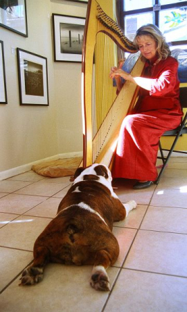 Doing some pet therapy in St. Augustine.  This doggie soon fell asleep. (photo by Aimee Wiles)