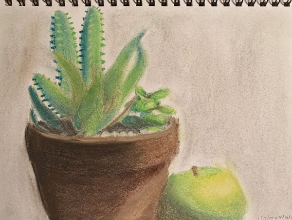 Student Project: Plant still life using color pastels.