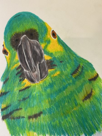 Colored Pencil Drawing for Instruction