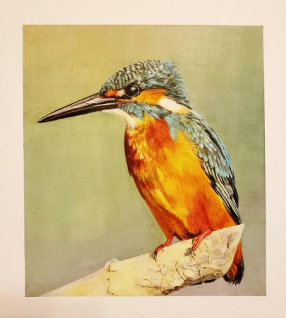 Kingfisher Bird / Acrylic paint on illustration board