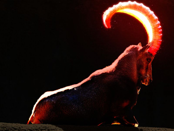 Photoshop - Red Glowing Goat