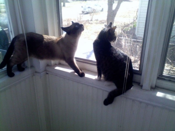I do have two cats. If you are allergic I will not be able to teach you at my home studio.