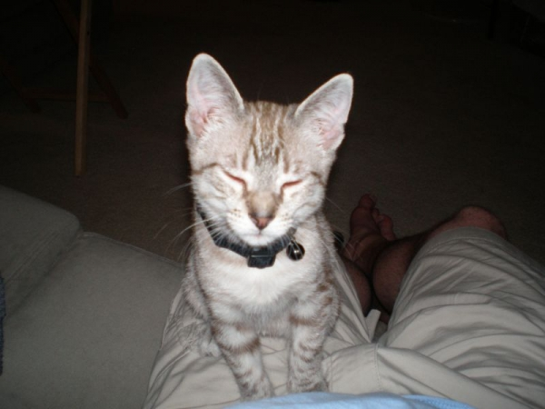 Lynx when I first got him