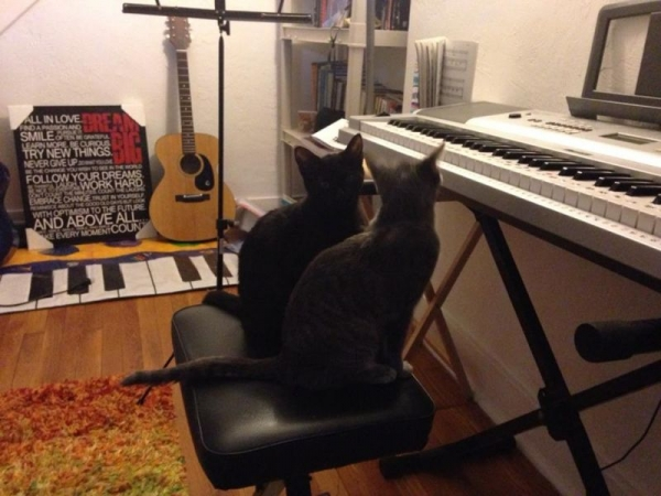 Doodalina and Dispetto our  Music Therapy Kitties and my dearest loves.