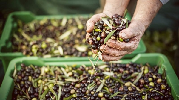 Food and farming are at the heart of Italian culture.