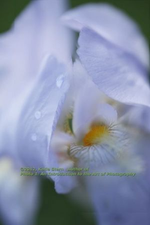 Raindrops on an iris. This is a great example of controlled depth of field, exposure, and composition.